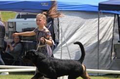 NZ Champion Ubersein Fair Dinkum HD 3:1 ED grade 2, JLPP Free