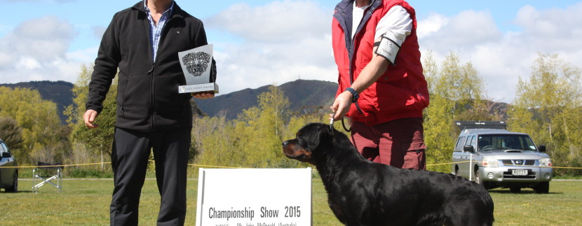 Vodka does it again. Reserve best in show and best Auslander at CRC show 2015