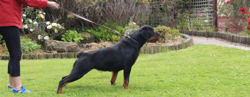 Taumata Australis and Danilo vom Kummelsee  Litter due May 2020