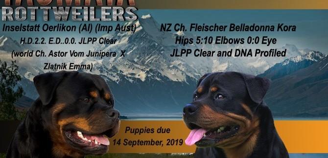 "News Flash  "" Oerlick and Korha having puppies, due September 2019"""